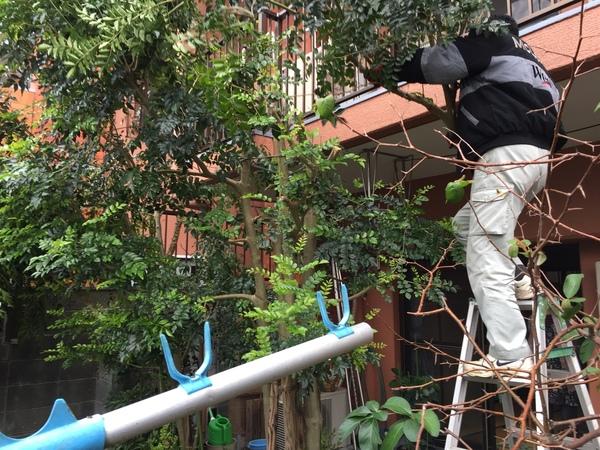 梅満町で庭木の剪定サムネイル