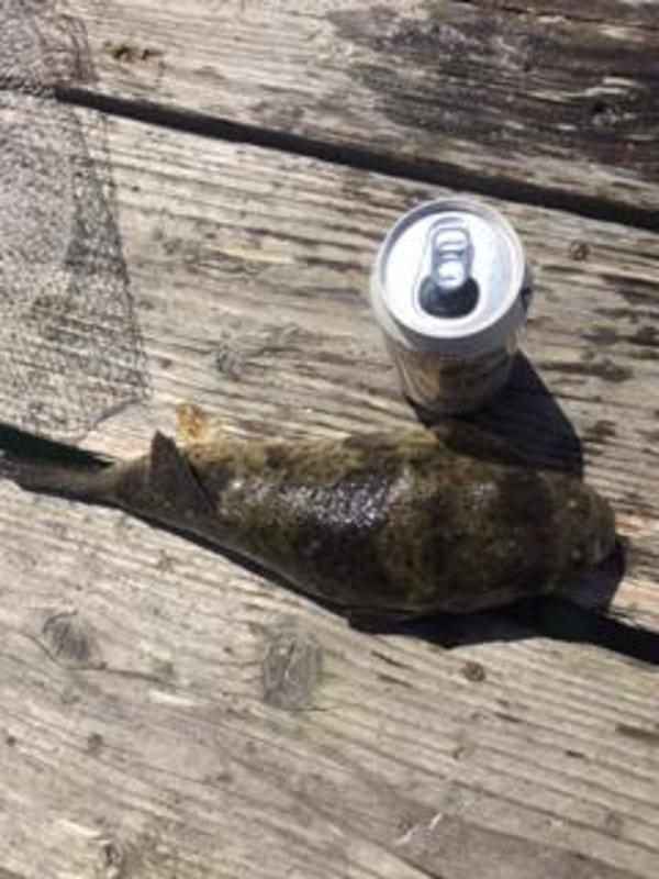 河豚が釣れました。サムネイル