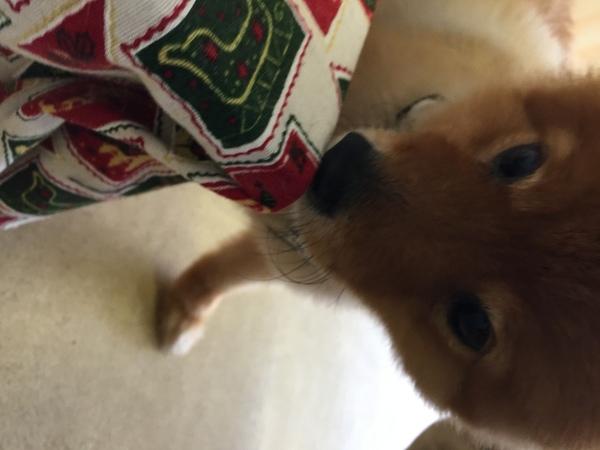 野中町の愛犬ヒカル君を動物病院へサムネイル