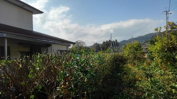 佐賀県小城市で剪定です。サムネイル