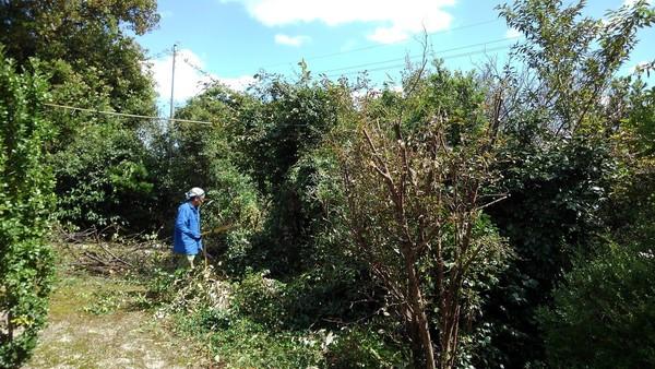 柳川で剪定・伐採・木こりサムネイル