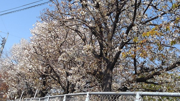 久留米にも春が来た!サムネイル