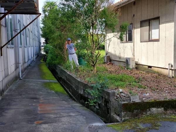 大川市で根本からの伐採サムネイル