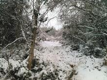 西日本に大雪サムネイル