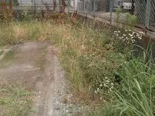 本日は駐車場の草刈りをしましたサムネイル