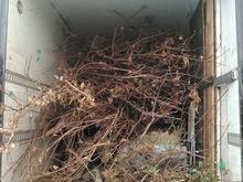 小郡市で大量の枯れ木サムネイル