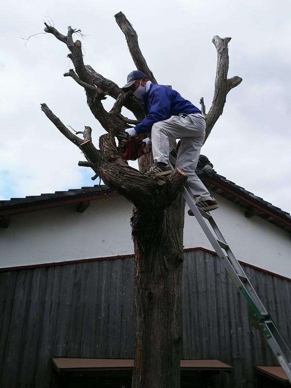 久留米市で久々の木こりサムネイル