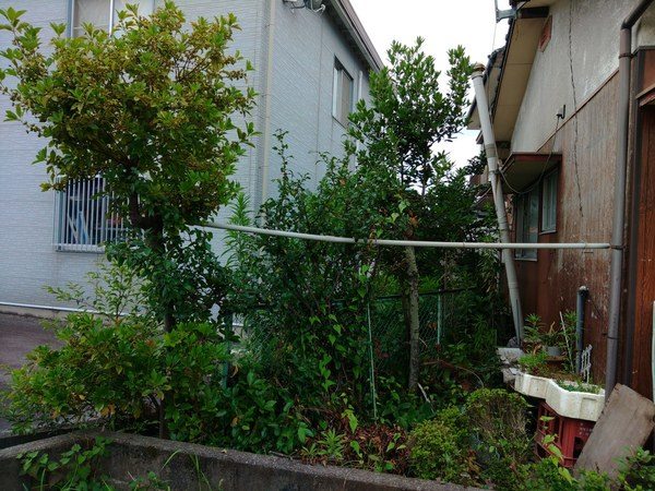 大牟田市で剪定・草取り・伐採サムネイル