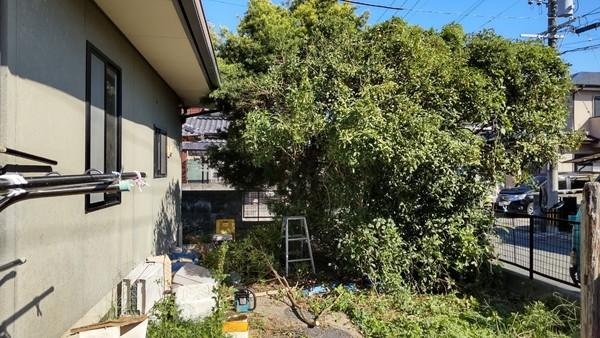 伐採と剪定:大牟田市サムネイル